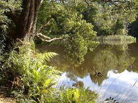 Weldborough Camping Ground - Accommodation QLD