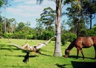 Neds Bed Horse O Tel - Accommodation QLD