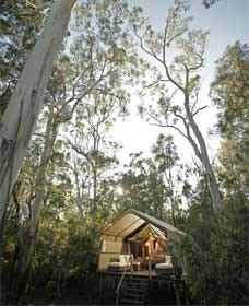 Paperbark Camp - Accommodation QLD