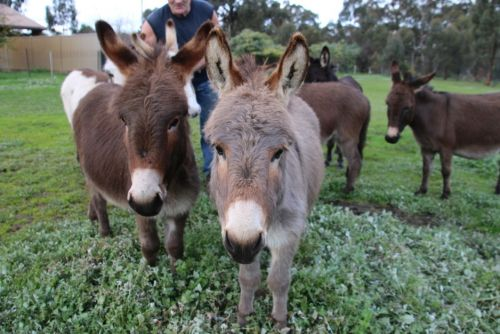 Donkey Tales Farm Cottages - Accommodation QLD