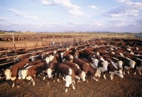 Bond Springs Outback Retreat - Accommodation QLD