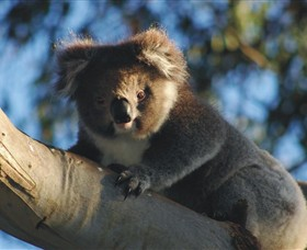 Bimbi Park Camping Under Koalas - Accommodation QLD