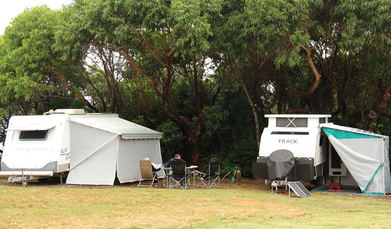 Pretty Beach campground - Murramarang National Park - Accommodation QLD
