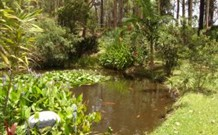 Tallowood Ridge B and B - Accommodation QLD