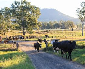 Tommerups Dairy Farmstay - Accommodation QLD