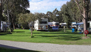 Pinjarra Caravan Park - Accommodation QLD
