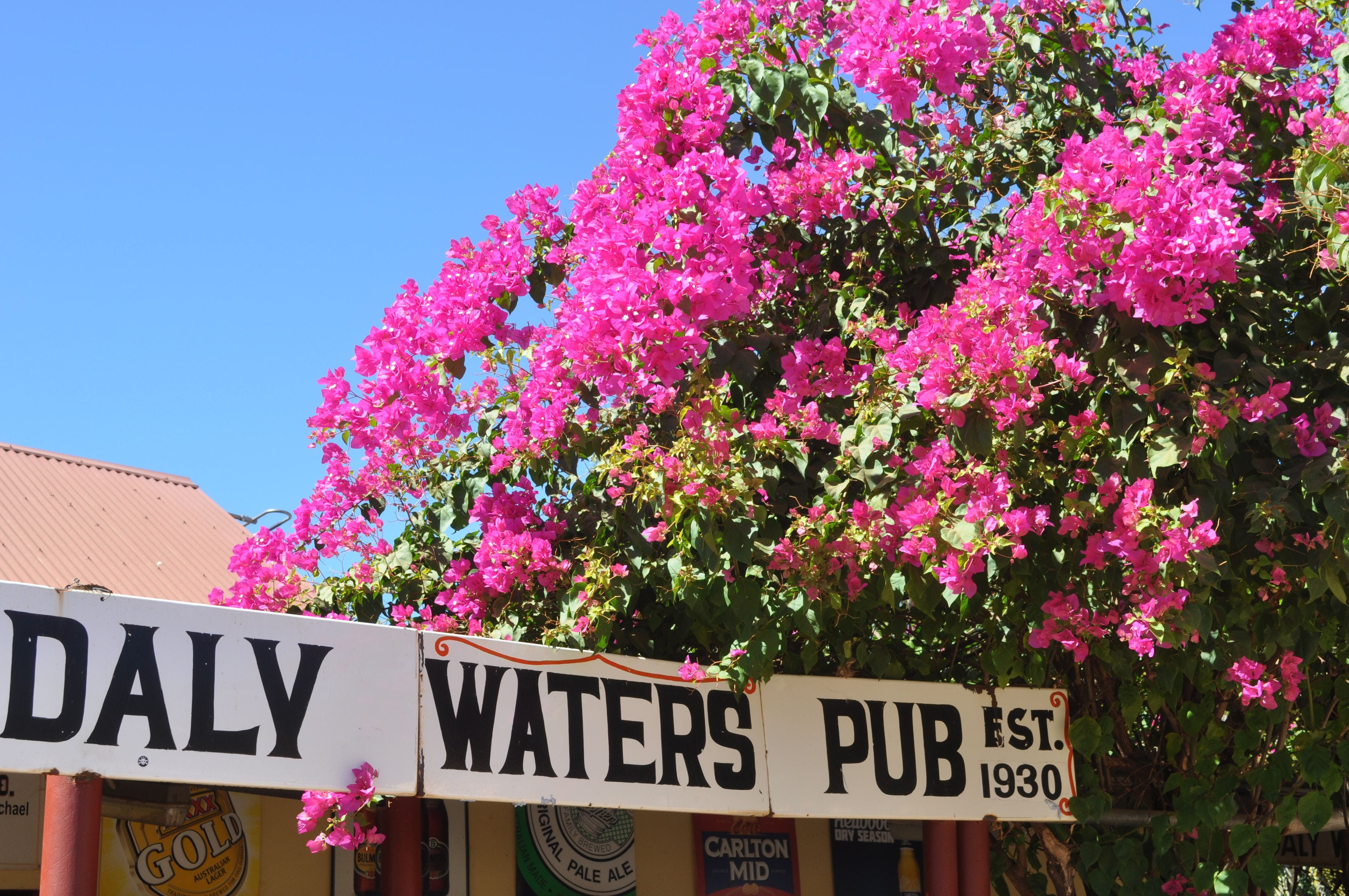 Daly Waters Historic Pub - Accommodation QLD