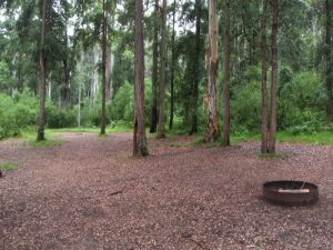 Murphys Glen campground - Accommodation QLD