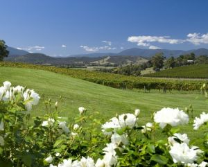 Balgownie Estate Vineyard Resort and Spa - Accommodation QLD