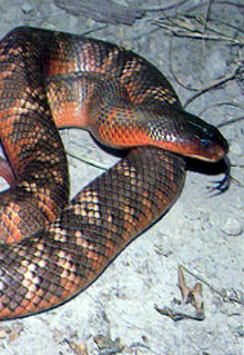 Armadale Reptile  Wildlife Centre - Accommodation QLD