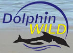 Dolphin Wild - Accommodation QLD