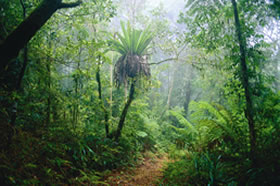 Lamington National Park and OReillys - Accommodation QLD
