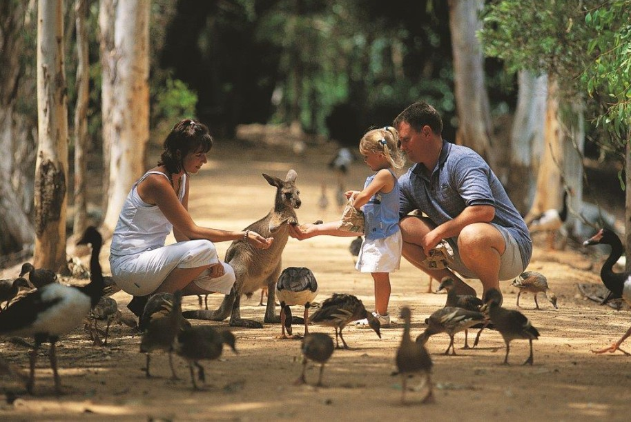 Billabong Sanctuary - Accommodation QLD