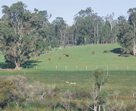 Scenic Drives - Bunbury Collie Donnybrook - Accommodation QLD