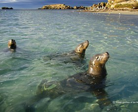 Shoalwater Islands Marine Park - Accommodation QLD