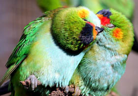 Rainbow Jungle - The Australian Parrot Breeding Centre - Accommodation QLD