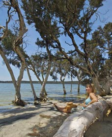 Stokes National Park - Accommodation QLD