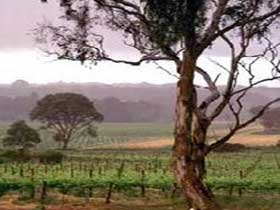 Yangarra Estate Vineyard - Accommodation QLD