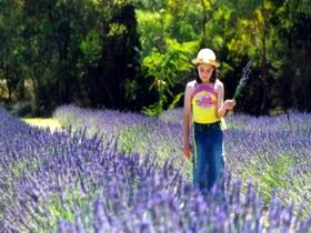 Brayfield Park Lavender Farm - Accommodation QLD