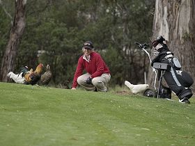 Tasmania Golf Club - The - Accommodation QLD