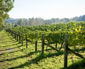 Surveyor's Hill Vineyards - Accommodation QLD