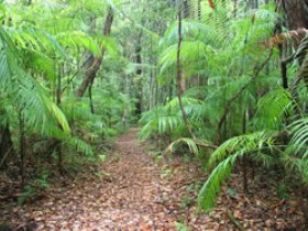 Delicia Road Conservation Park - Accommodation QLD