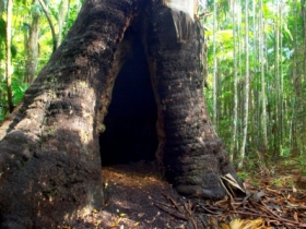 Tewantin National Park - Accommodation QLD