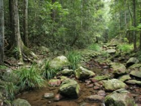 Amamoor State Forest - Accommodation QLD