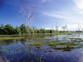 Tyto Wetlands - Accommodation QLD