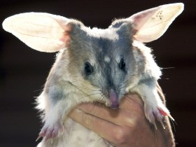 Charleville - Bilby Experience - Accommodation QLD