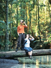 Birdwatching on the Fraser Coast - Accommodation QLD