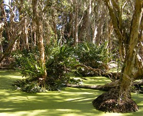 Arkarra Lagoons and Tea Gardens - Accommodation QLD
