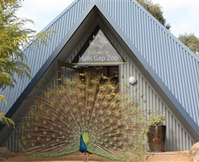 Halls Gap Zoo - Accommodation QLD