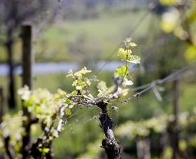 Norton Estate Wines - Accommodation QLD