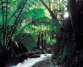 Melba Gully - Accommodation QLD