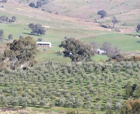 Wymah Organic Olives and Lambs - Accommodation QLD