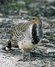 Yongergnow Australian Malleefowl Centre - Accommodation QLD