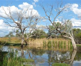 Lagoon Creek - Accommodation QLD
