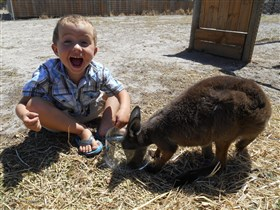 Animal Farm Goolwa - Accommodation QLD