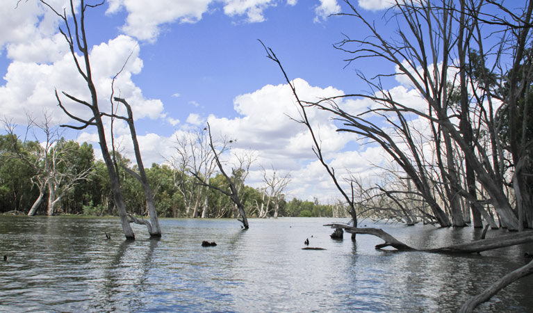 Murrumbidgee Valley National Park - Accommodation QLD