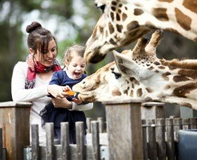 Taronga Western Plains Zoo Dubbo - Accommodation QLD