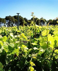 Basalt Wines - Accommodation QLD