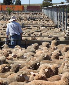 Livestock Marketing Centre - Accommodation QLD
