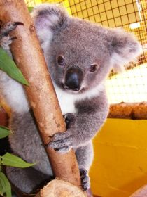 Cooberrie Park Wildlife Sanctuary
