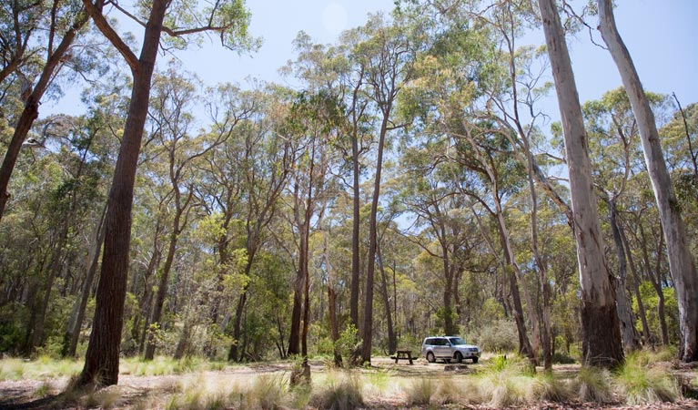 Coolah Tops National Park - Accommodation QLD