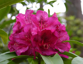 Campbell Rhododendron Gardens - Accommodation QLD