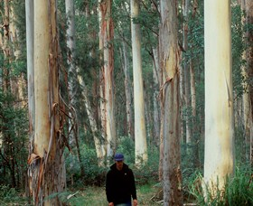 Blue Gum Forest - Accommodation QLD