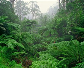 Tarra Bulga National Park - Accommodation QLD