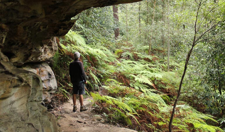 Dharug National Park - Accommodation QLD