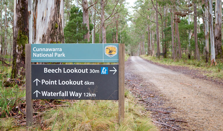 Beech lookout - Accommodation QLD